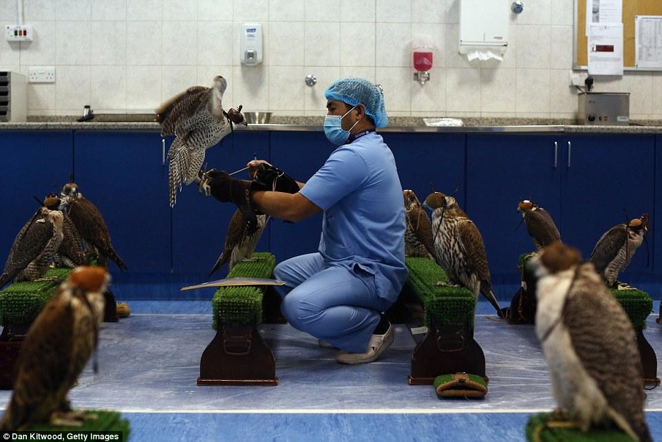 falcon-hospital