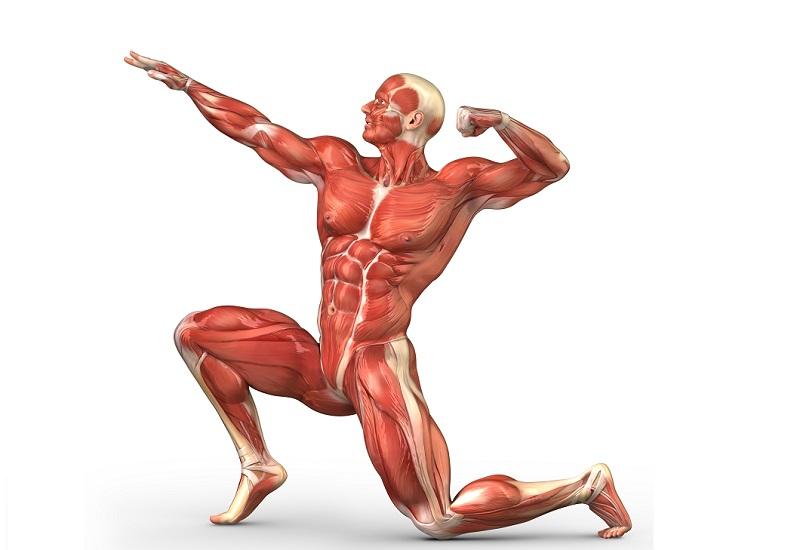 muscularmanposing