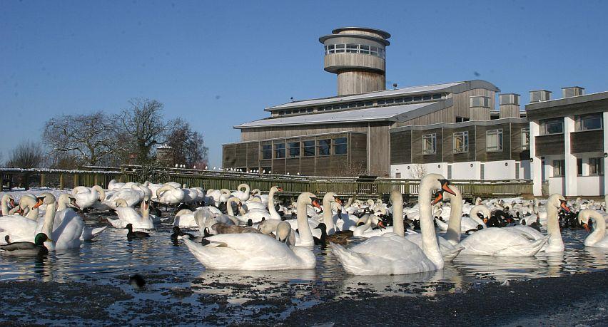 Slimbridge Wetland Centre, Gloucestershire