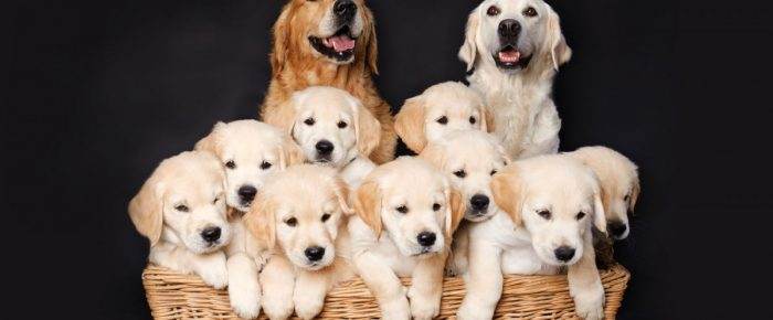 Tips for Establishing your Dog Breeding Business