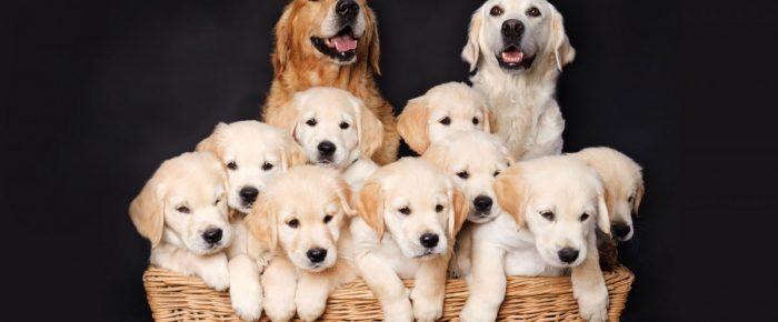 Tips for Establishing your Dog Breeding Business