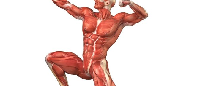 Enhance Skeletal Muscle And Reverse Aging