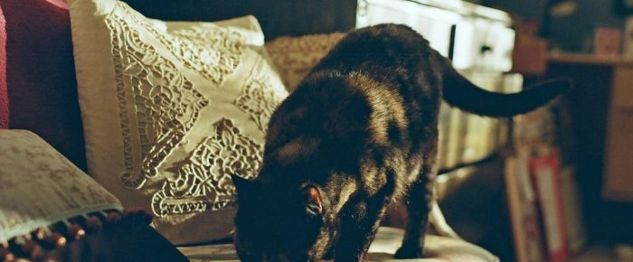 How To Make Your Home Cat-Friendly