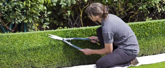 Everything You Need To Know About Hedge Trimming