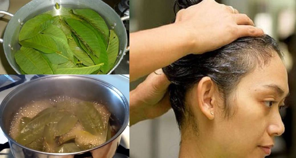 Why is guava leaves good for your hair