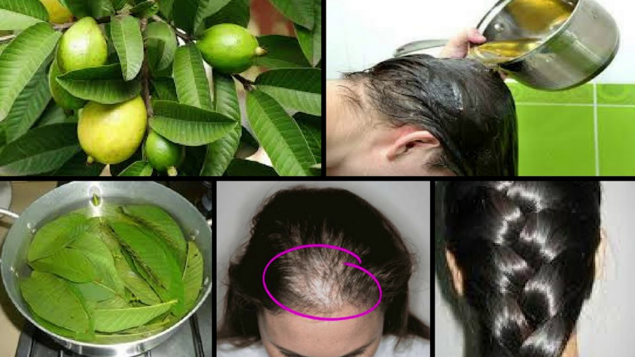 use guava leaves to improve your hair growth