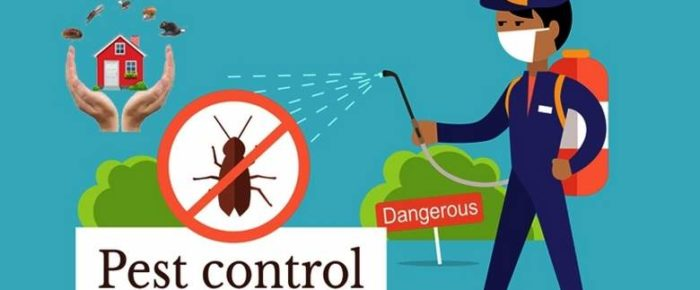 What Can I Do For The Pest Control In My Home?